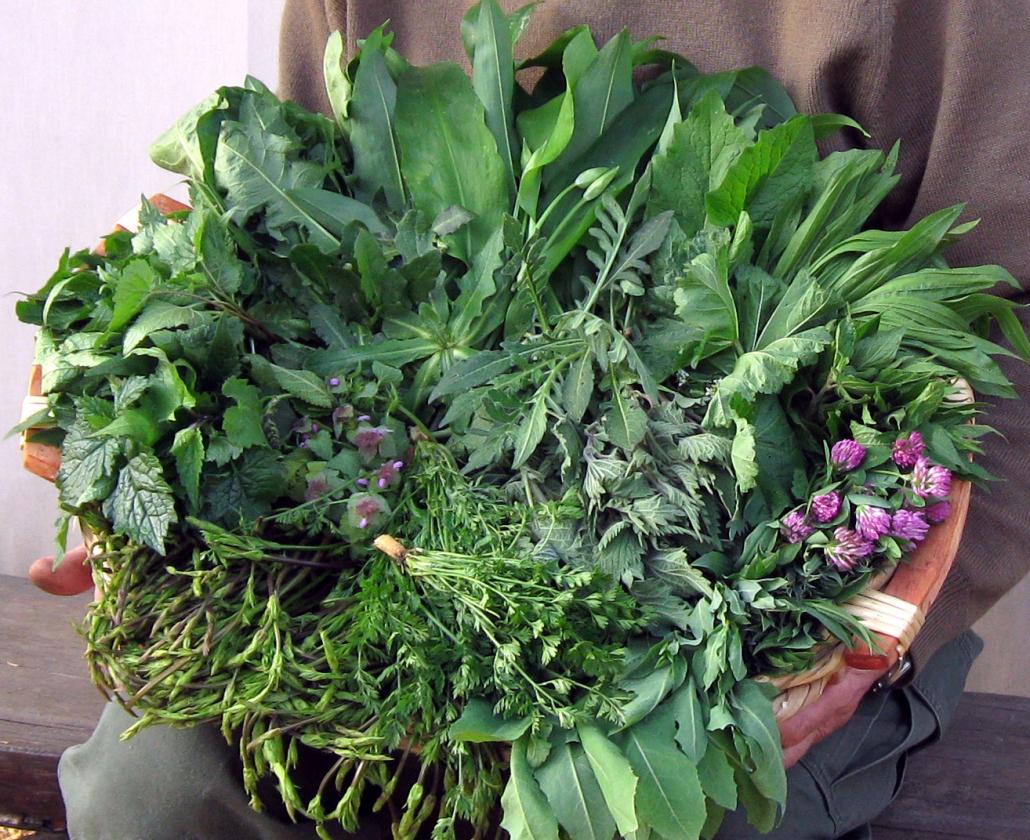 Fiori E Piante Commestibili erbe e fiori spontanei edibili - holiday homes marina